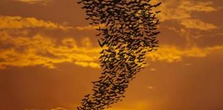 Bats Raise Their Voices