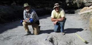 Dinosaur Fossils Reveal
