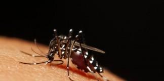 U.K. Diagnoses 3 With Zika Virus