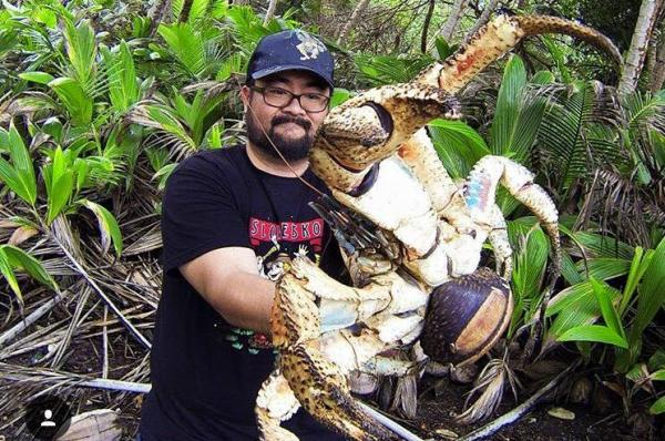 Christmas Island Tourist Catches Massive Coconut Crab   Gephardt Daily
