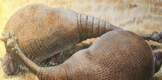 Ancient Glyptodonts