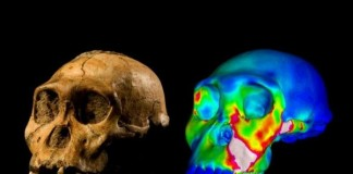 Early Human Ancestor