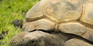 Early-hunter-gatherers-regularly-ate-tortoise
