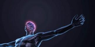 Repairs Nervous System