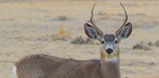 Deer Attacks Man