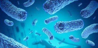 Investigate Bacterial Infection