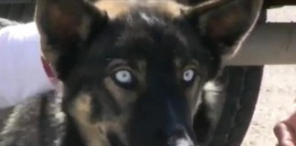 Dog Found Alive On Island