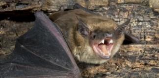Bat Poop Found
