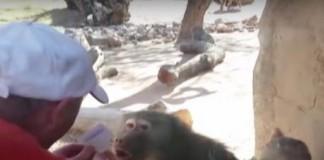 Man Amazes Baboon
