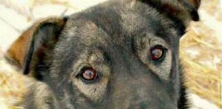 Iditarod Sled Dog Death