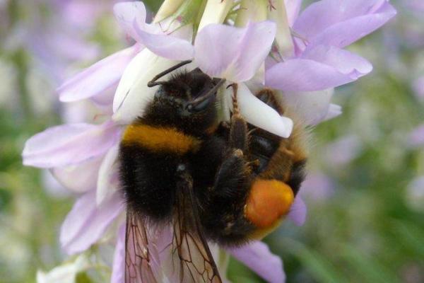 Pesticides Affect Bees