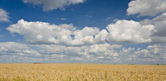 Protect Modern Wheat