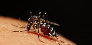 CDC-Zika-Virus-causes-birth-defects