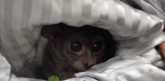 Police-Oregon-pet-store-owner-tipped-prostitute-with-bushbaby
