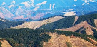 Study-Clear-cutting-undermines-carbon-storage-in-forest-floor