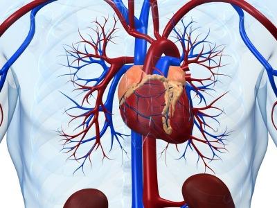 heart sized
