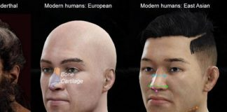 nose shape, gene