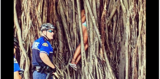 Key West Florida banyan tree climb rescue