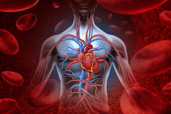 Cancer passes heart disease as top killer in 12 European countries | Gephardt Daily