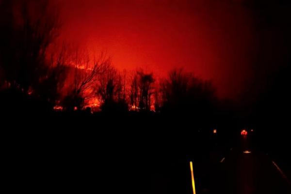 Gatlinburg Wildfire: 10000 Animals Are Safe After Aquarium Staff Forced To Flee