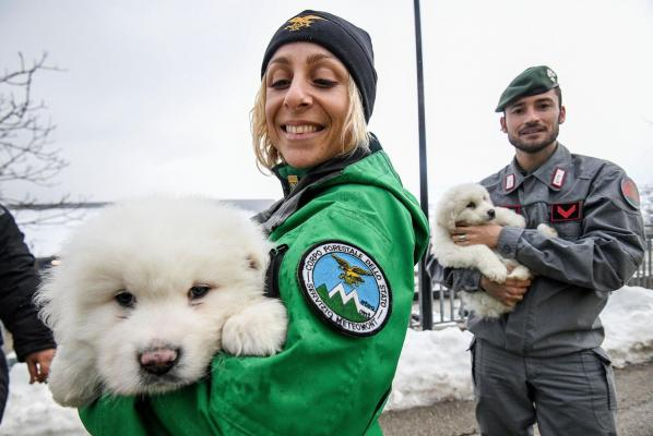 Rescue of 3 puppies gives hope for more survivors in Italy avalanche