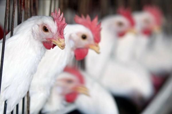 South Korea to import 1.6 million U.S. eggs after bird flu outbreak