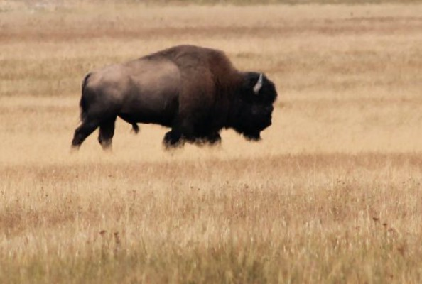 Couple injured by park bison