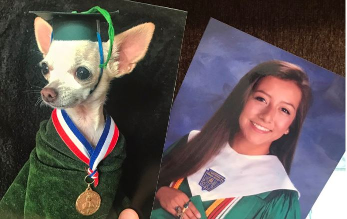 Woman replaced her family photos with dog replicas