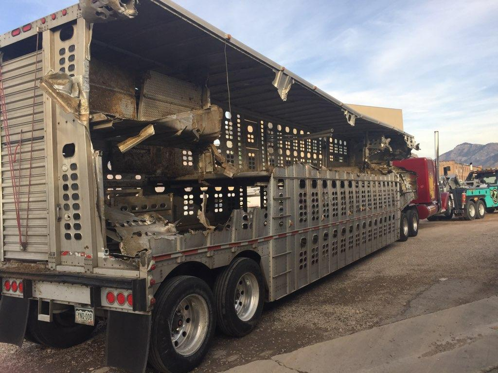 Cattle Truck Crashes On Overpass Dumping Animals To