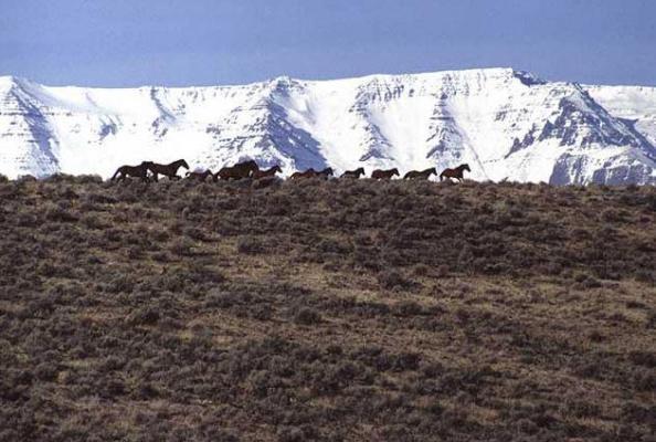 Idaho tops list of fastest-growing states, US Census Bureau says