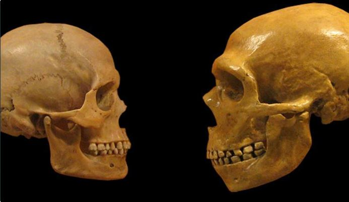 Earliest evidence of hominin interbreeding revealed by DNA analysis - Gephardt Daily
